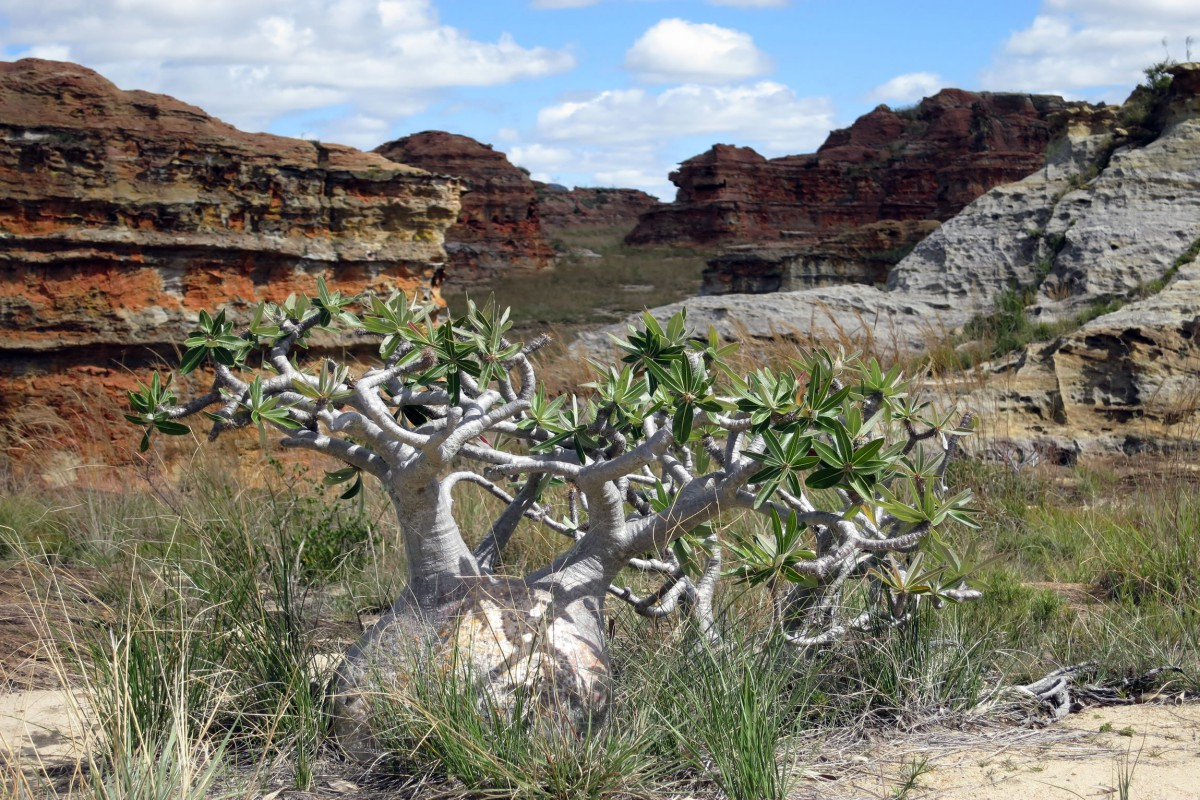 Madagascar-Wildlife-Tours-Isalo-National-Park_Flora-2