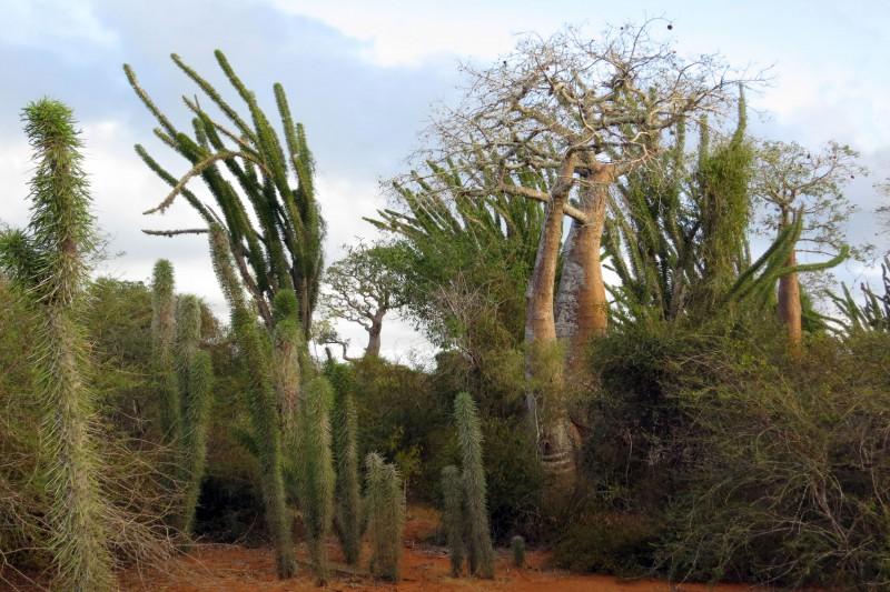 Madagascar-Wildlife-Tours-Iftay_Forest
