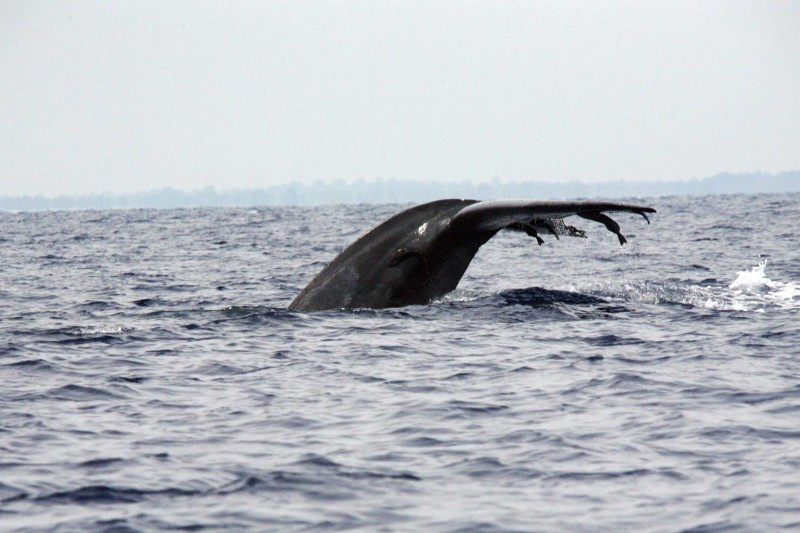 Sri-Lanka_Itineraries_Blue-whale-Trincomalee