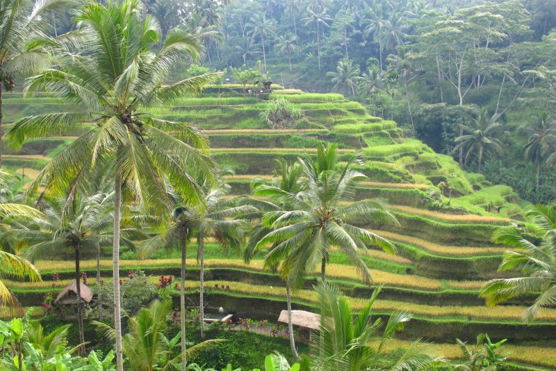 Indonesia-Tailor-made-holidays-Bali_Padi-FIelds