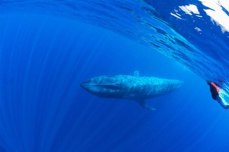 Sri-Lanka-Tours-_Blue-whale-Snorkelling